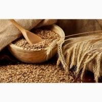 Продам зерно урожая 2020 года