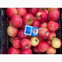 Продам яблоко «Хани»