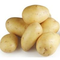 Свежий желтый картофель