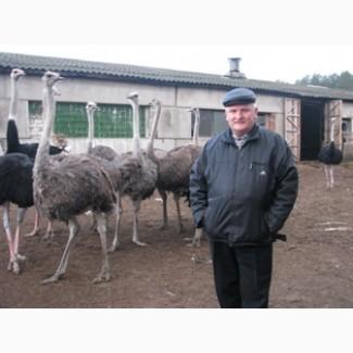 Акция Страусиная ферма в Мозыре 3186 м2 зд 30 га угодий пруд готовый бизнес