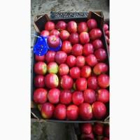 Яблоки мелким и крупным оптом